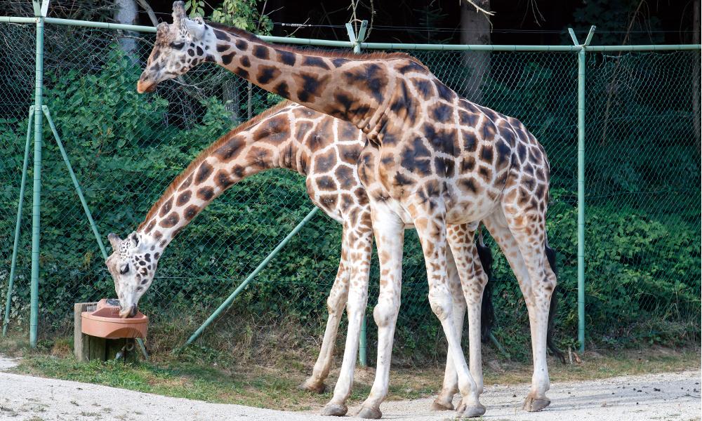 Iz kina k žirafam