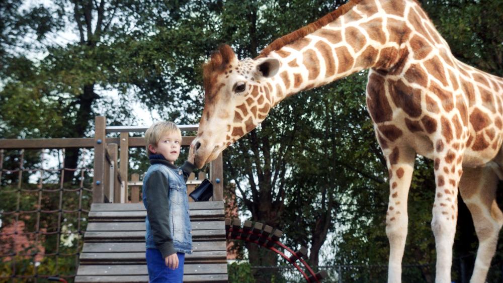 Brezplačne vstopnice za prvošolčke za film Moja žirafa