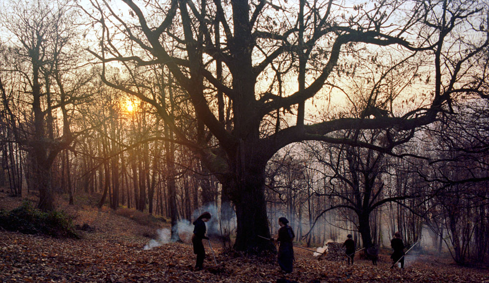 Zgodbe iz kostanjevih gozdov