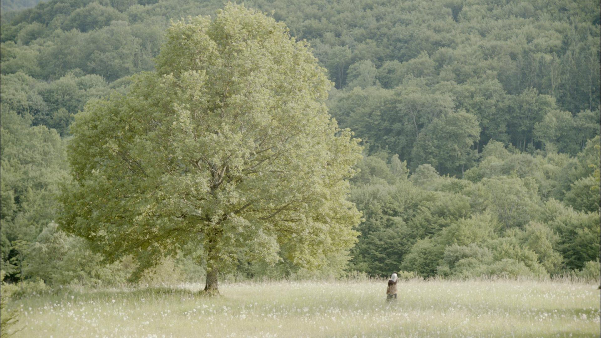 Filmska srečanja ob kavi: pogovor ob projekciji filma Deklica in drevo